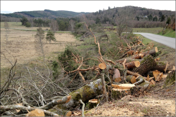 Une photo d'un abattage d'arbres routiers en Corrèze