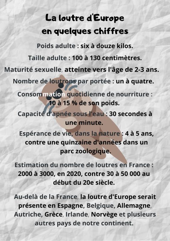 La loutre d'Europe en quelques chiffres
