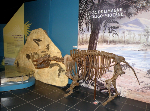 Un squelette de nos