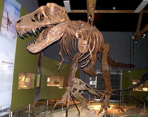 Squelette complet de tyrannosaure