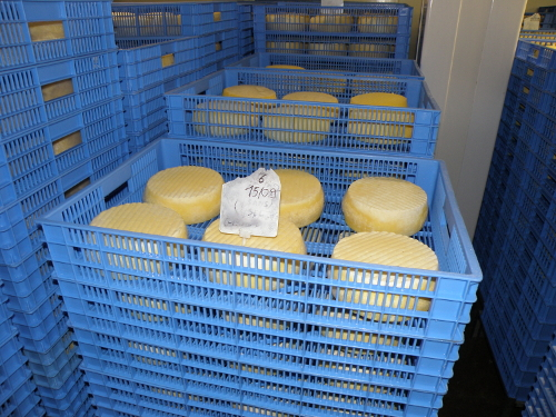 Des fromages à l'affinage