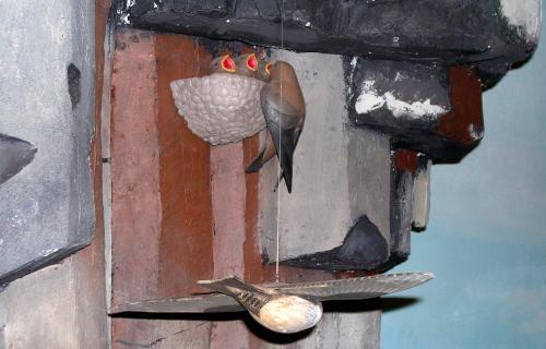 Une nichée d'hirondelles rustiques dans le diorama