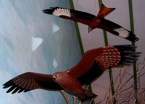 Milan Royal en vol dans le diorama de la Maison