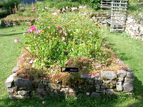 roseraie, plantes grasses et mousses