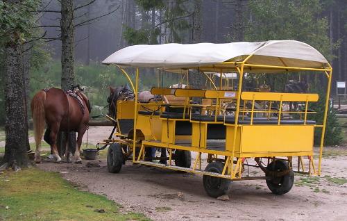 L'une des calèche utilisée pour la visite des bisons du parc de Sainte-Eulalie