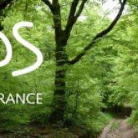 SOS Forêt, la bannière et le logo